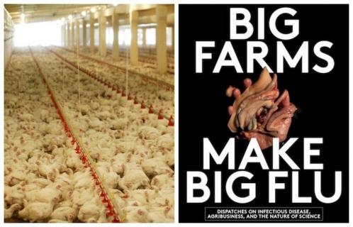 Big Farms Make Big Flu ile ilgili görsel sonucu